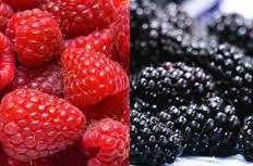 Red Fruit, Black Fruit: Wine Tasting & Workshop