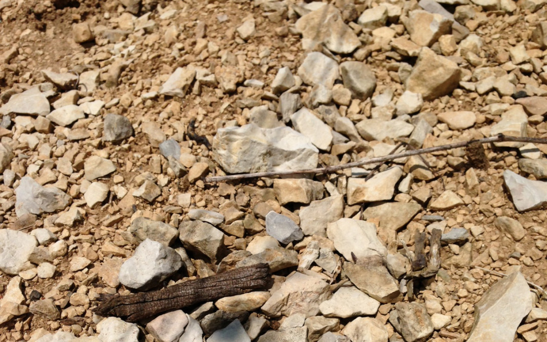 The Wet Stones Experiment: Minerality in Wine