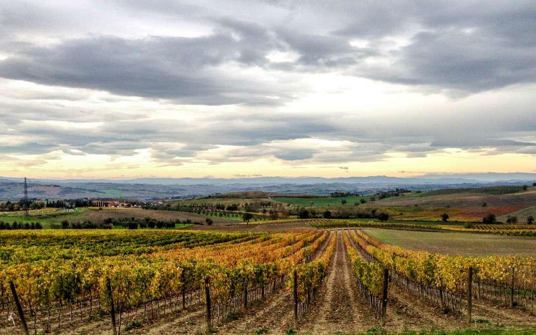 Vineyards in Montalcino, Italy.