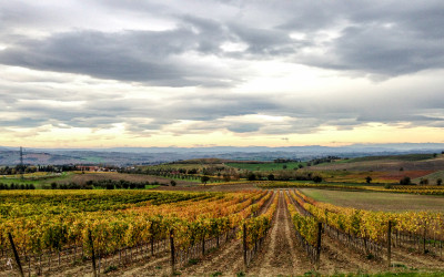 Brunello: Tuscany's Premier Red Wines