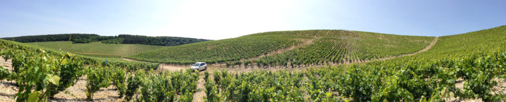 Uncovering terroir in the climats of Chablis, France